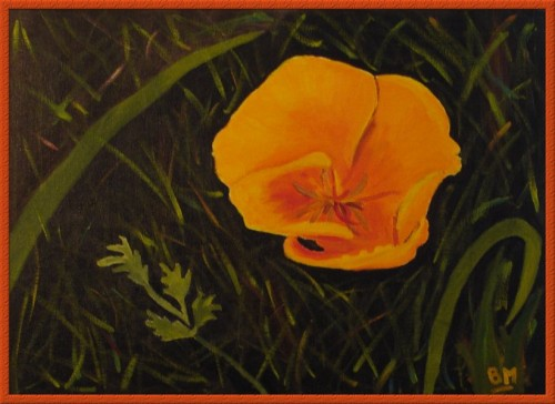 CaliforniaPoppy.jpg